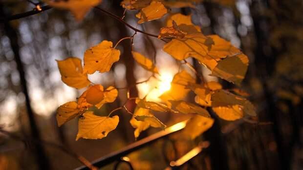 Начало золотой осени в столице прогнозируется на этой неделе