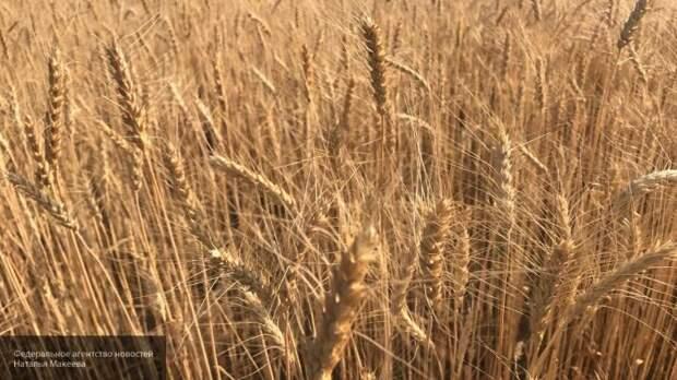 В США удивились маневру России с экспортом зерна за рубеж