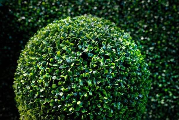 Комнатные деревья: виды, уход, особенности посадки (43 фото)