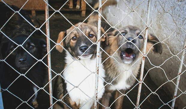 Жители Туймазов жалуются на выросших бездомных щенков, нападающих на людей