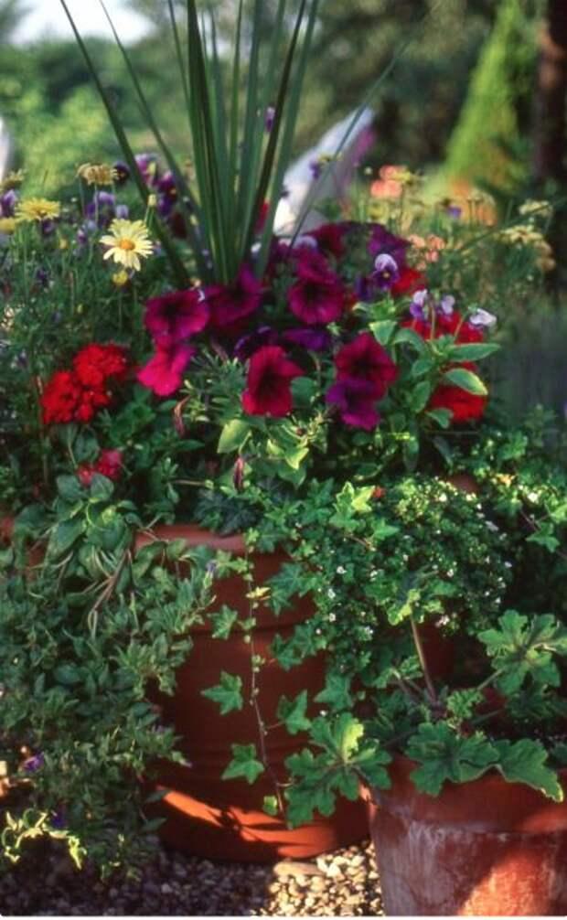Лучшие цветы для контейнеров-каскадов для балкона и дачи