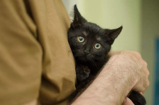 Как определить кошку, которая умеет лечить?