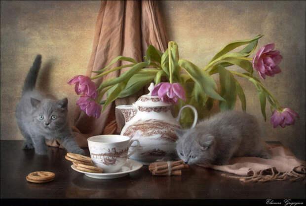 Натюркотики от Элеоноры Григорьевой