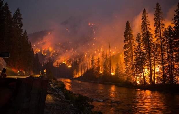 У семьи практически не было времени на сборы, пожар стремительно приближался к их дому  животные, питомец, пожар, хряк