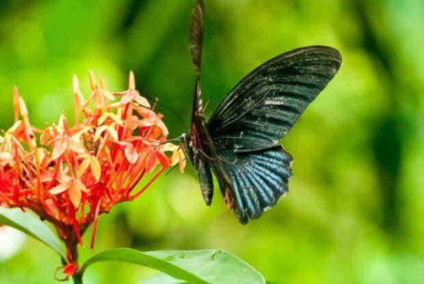 Привлечь бабочек. | Фото: Цветы в саду - Усадьба.