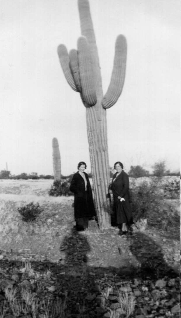 Две женщины позируют возле кактусового дерева.