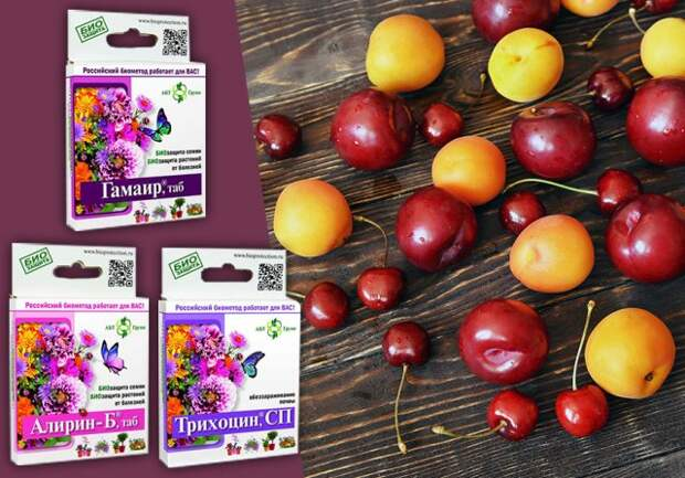 Чем обработать вишню, сливу и абрикос весной и летом