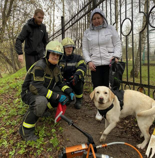 Застрявшего в заборе лабрадора освободили в Лазоревом проезде
