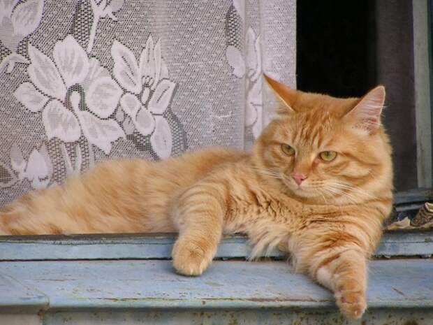 Кошка, которую купили маленькой девочке, нашла свою повзрослевшую хозяйку через 10 лет