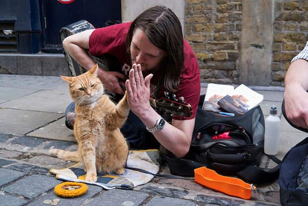 ВЛондоне умер герой книг-бестселлеров рыжий уличный кот Боб