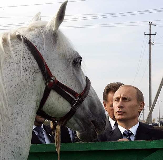 В 2004 году Владимир Путин посетил агрофирму «Николаевская»
