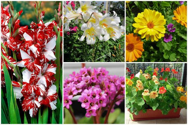 10 целебных цветов и растений на Вашей клумбе