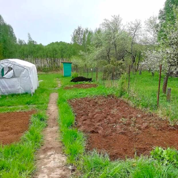 Что выгоднее - выращивать овощи самому или купить уже готовое