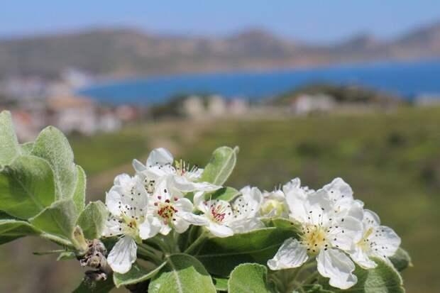 Погода в Крыму на 7 мая: переменная облачность и тепло до +22°