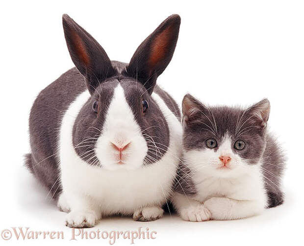 В мире животных: родные братья и сестры от разных мам