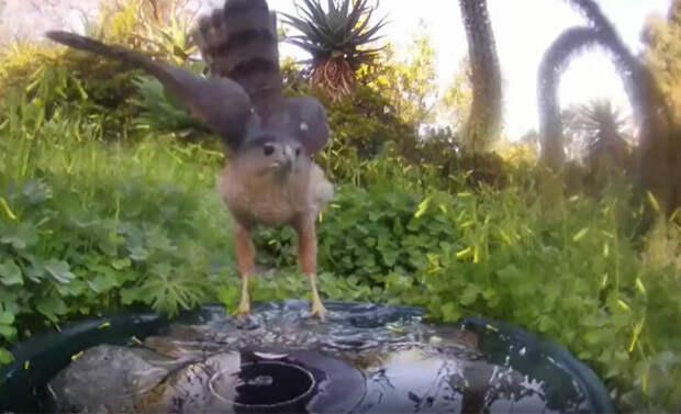 Скрытая камера показала, какие звери приходят на ферму попить воды