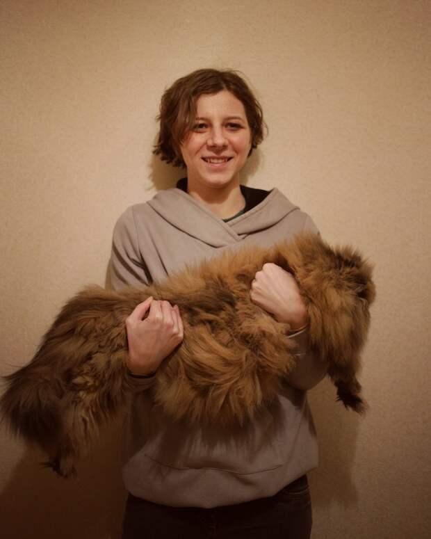 Рунет восхищен кошкой-уникумом Шерри, которую нужно вычесывать каждый день