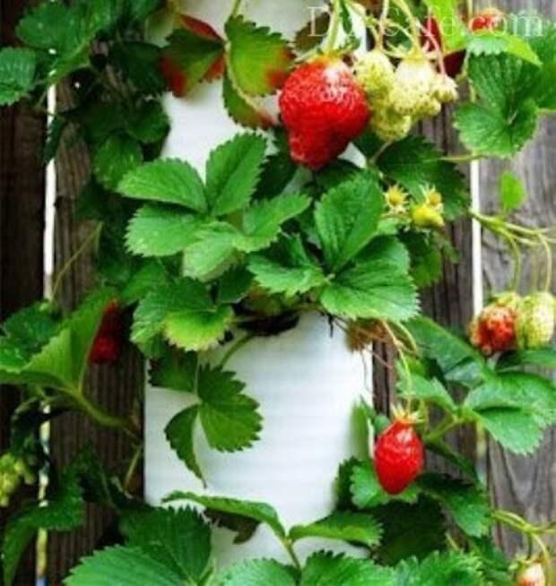 Конструкция для выращивания клубники