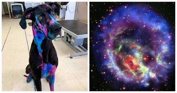 Неземная красота: девушка красит своего дога так, что он похож на галактику