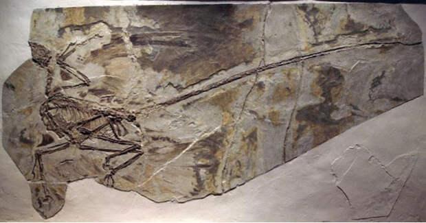 Четыре скандальные археологические фальсификации