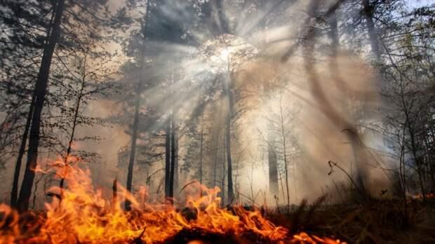 СК возбудил дело после пожара, уничтожившего деревню в Омской области