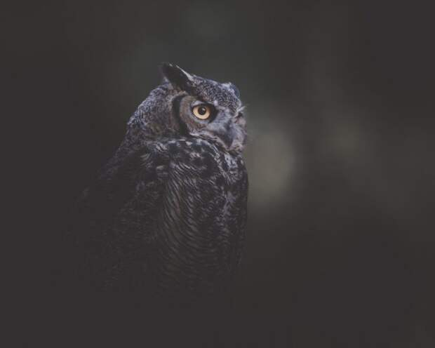 Драматичные портреты диких животных