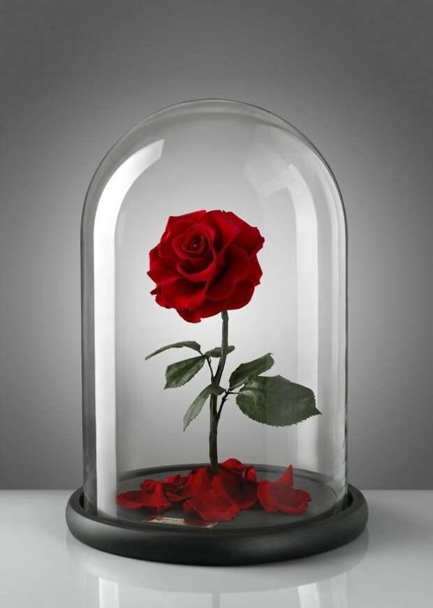 Самые настоящие заколдованные розы!