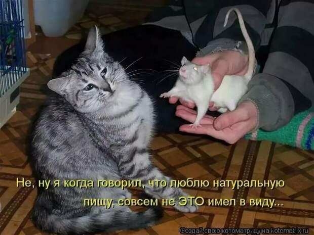 Фото юморных кошек. Топ 20.