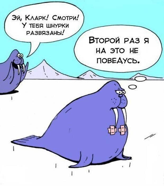 wz-rODfJMcY