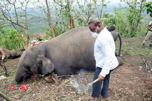 Стадо слонов погибло в Индии от удара молнии