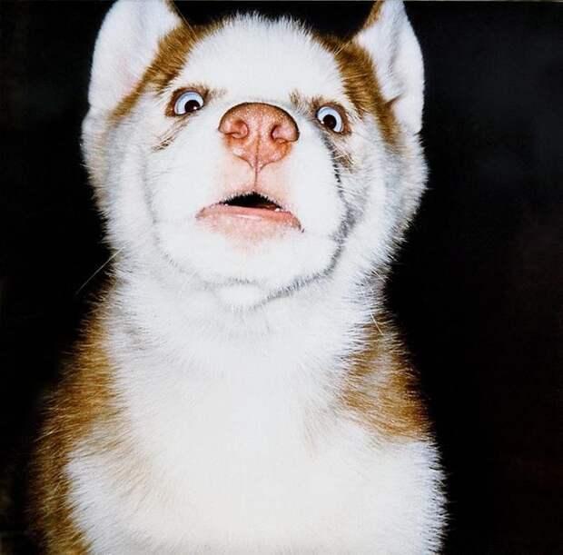 12 собак, которые и не подозревают о том, насколько они милые