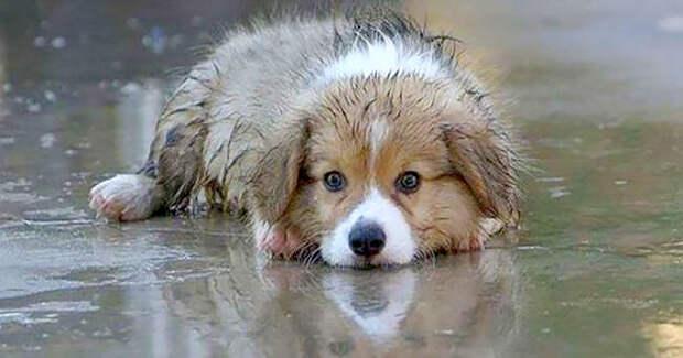 Мокрый дрожащий щенок плакал у лавки…