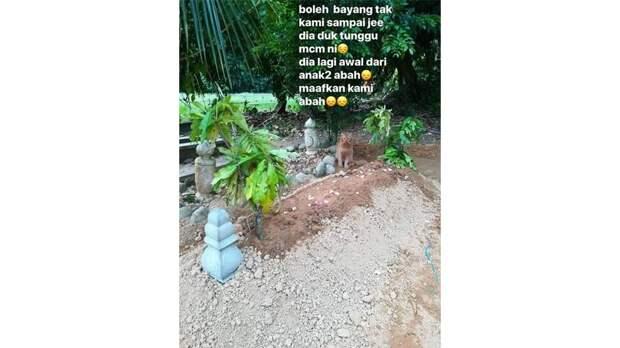 Верный кот каждый день ходит на могилу хозяина