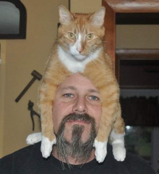 5. Популярность, животные, идея, интернет, кот, фото, шапка