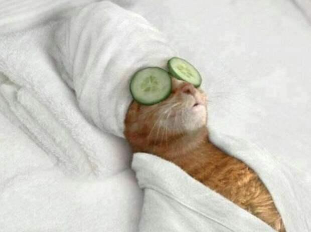 3. Кошка красива и без косметики. жены, интересное, кошки, юмор