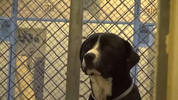 Реакция пса Бенни на то, что его наконец забирают из приюта