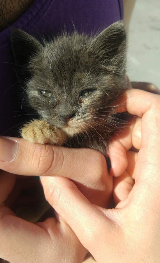 Британка поехала отдыхать в Грецию, а назад вернулась с маленьким котенком из мусорного бака