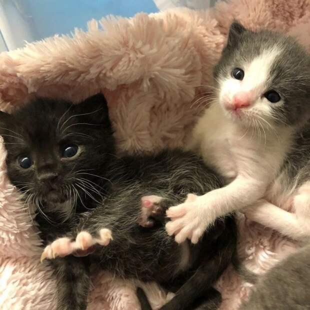 Осиротевшие котята очень горевали без мамы. И хаски не выдержала…