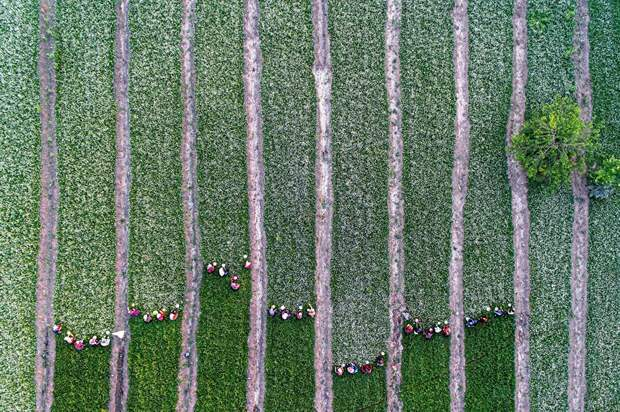 Захватывающие фотографии природы, получившие премию 2020 International Photography Awards