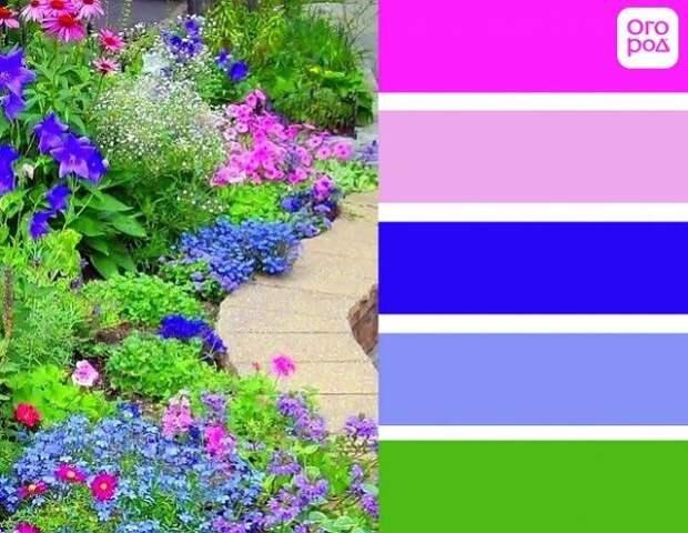 клумба с розовыми и голубыми цветами, розово-синий сад
