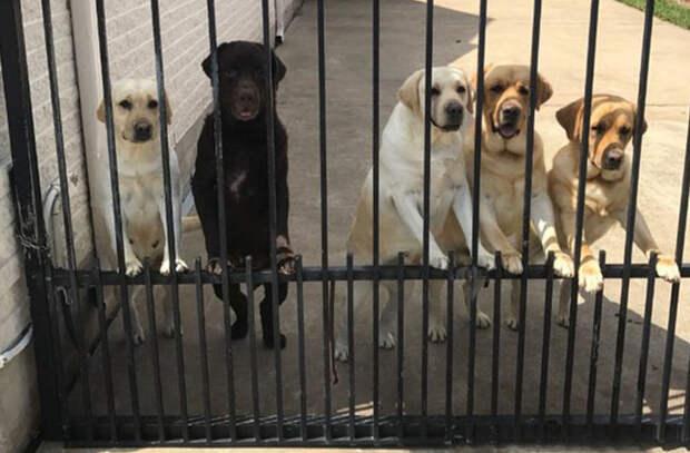 В США почтальон подружился с пятью собаками из одного дома