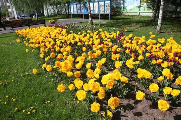 В Лосинке пройдёт конкурс цветников района