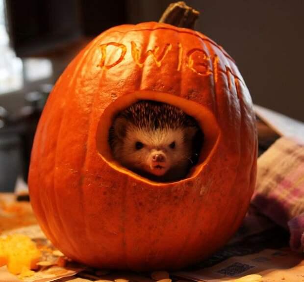 Животные уже начали отмечать Хэллоуин