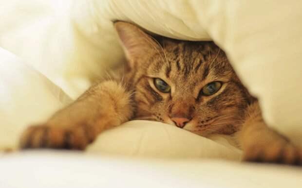 «Ты меня правда не отдашь» уличная кошка спала на подушке нового хозяина и мурчала всю ночь