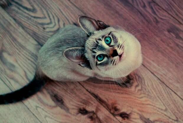 Кошка как индикатор кармы