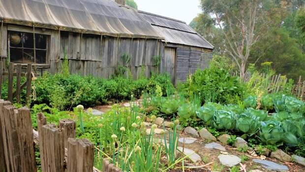 Садоводы жалуются на высокую стоимость электричества и бюрократическую волокиту