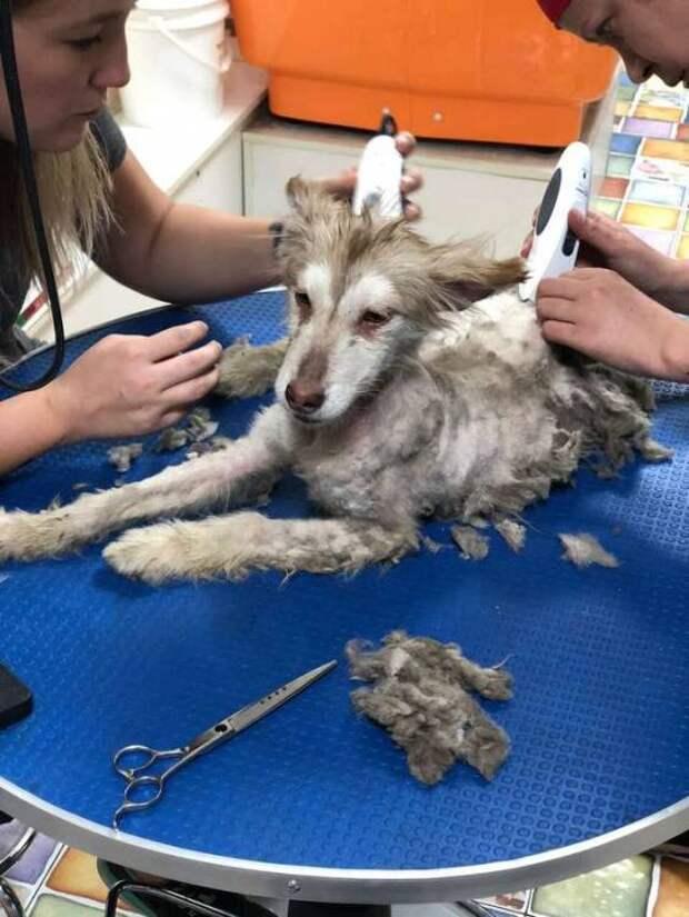 Болезненно худая и очень испуганная собачка, ютилась в углу, пытаясь спрятаться от всего мира