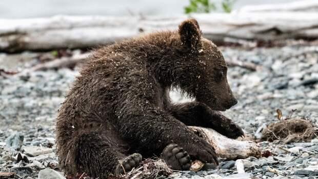 Медведица Маша впервые показала детеныша посетителям зоопарка в Балахне