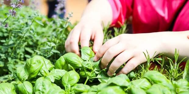 Для пенсионеров из Марьиной рощи открыли бесплатные курсы по садоводству