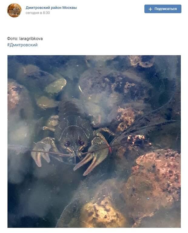 Фото дня: рак поселился в Большом Ангарском пруду
